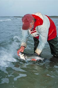 Think about tomorrow, release your fish today